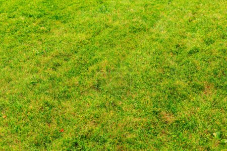 Photo for Green grass background close up - Royalty Free Image