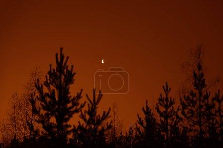 Photo pour Forêt et la lune pendant la nuit. Panoramique de nuit, paysage de ciel étoilé avec la lune - image libre de droit