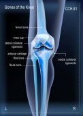 X ray bones the of knee