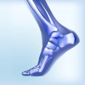 Light blue visualization of bones of foot