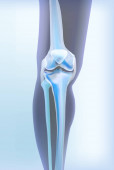 Light blue transparent view of bones the of knee