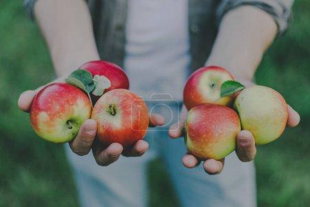 Photo pour Jeune homme automne cueillette des pommes dans le jardin et en montrant la récolte. Gros plan. Horizontal - image libre de droit