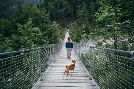 Photo pour Randonneur, voyageur ou touriste sur aventure randonnée ou d'explorer voyage randonnées au milieu de la pendaison d'un pont en bois dans la forêt de montagne ou de la rivière, porte le pull en laine bleu, bottes et bonnet, avec chien basenji brun - image libre de droit