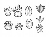 Animal tracks sketch engraving vector illustration Scratch board style imitation Black and white hand drawn image