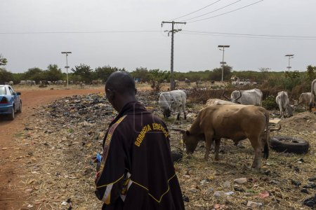 Photo for Bissau, Republic of Guinea-Bissau - February 5, 2018: People selling cows near a landfill in the outskirts of the city of Bissau, in Guinea-Bissau, West Africa. Health and sanitary conditions are very poor in Guinea Bissau, wich is one of the poorest - Royalty Free Image