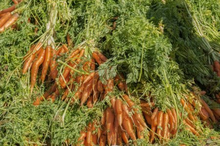 Carrots on sale at weekly market.