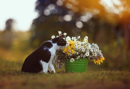Porträt einer niedlichen Katze, die in einem sommerlich warmen Garten auf dem
