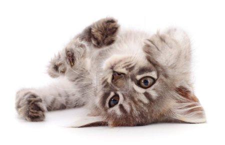 Photo pour Petit chaton gris isolé sur fond blanc. - image libre de droit