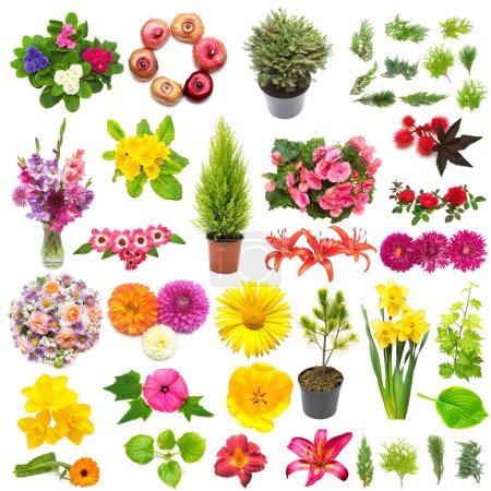 Photo pour Concept créatif printemps nature à partir de plantes. Collection de fleurs, feuilles, genévriers, pins isolés sur fond blanc. Couché plat, vue du dessus - image libre de droit