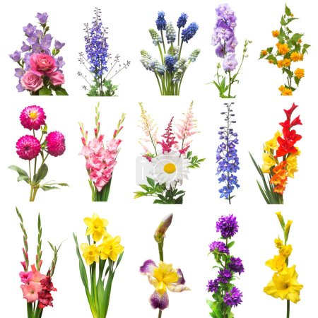 Collection beautiful flowers assorted delphinium, gladiolus, lily, iris, muscari, kerria japonica, daffodil, dahlia and rose. Flat lay, top view