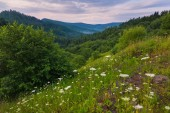 White wildflowers growing at the foot of the huge green mountains