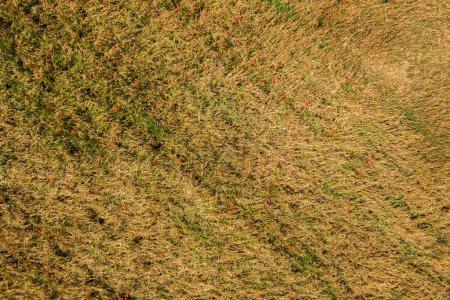 Photo pour Vue aérienne d'un champ orange dans une journée ensoleillée - image libre de droit