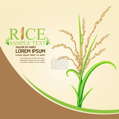rice vector Background for Products.