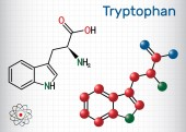 Tryptophan Trp or W amino acid molecule is used in the biosynthesis of proteins Structural chemical formula and molecule model