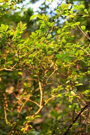 Photo pour La nature du paysage des plantes à hong kong - image libre de droit