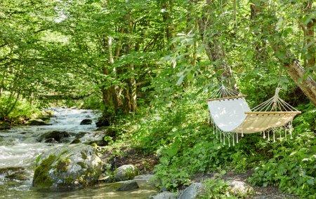 Photo pour Hamac dans la forêt au bord de la rivière - image libre de droit
