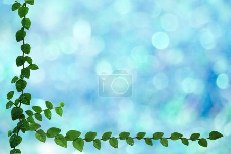 Green leaves of Coatbuttons nature border and blur...