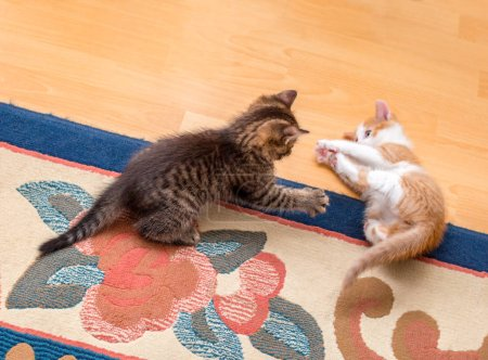 Two cute kittens playing on the carpet. Selective focus
