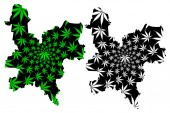 Kirov Oblast (Russia Subjects of the Russian Federation Oblasts of Russia) map is designed cannabis leaf green and black Kirov Oblast map made of marijuana (marihuanaTHC) foliag