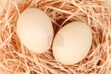 Photo for Eggs in a nest on white background - Royalty Free Image