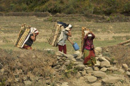 Photo pour Les pauvres paysannes népalaises portent du bois de chauffage de la forêt - image libre de droit