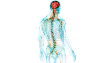 Photo for Modern digital illustration of human brain - Royalty Free Image