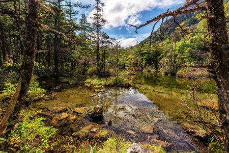 Photo pour Paysage pittoresque avec des arbres de montagne et rivière en face - image libre de droit