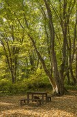 wooden benches and table in the beautiful forest for rest