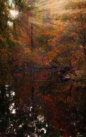 Photo pour Forêt multicolore d'automne. Les rayons du soleil traversent le feuillage. Arbres à feuilles rouges, vertes et jaunes, marais. Faible profondeur de champ, netteté sélective, lumière du jour, retouche de l'auteur - image libre de droit