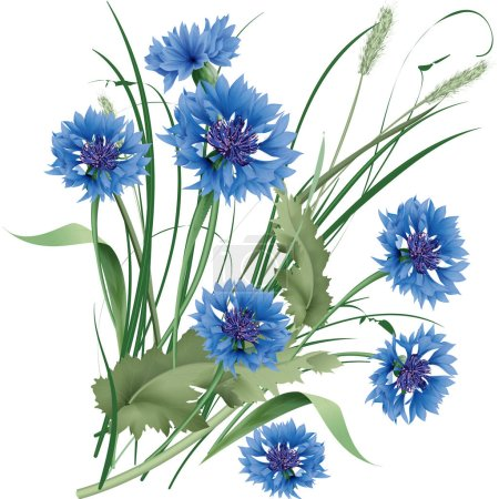 Bouquet bunch of blue cornflowers wildflowers with green leaves. Vector illustration
