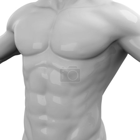 Photo for Male Muscles, 3D abdominal - Royalty Free Image
