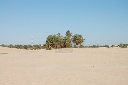 Photo for Sand dunes in the sahara desert africa blue sky - Royalty Free Image