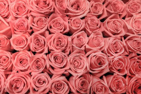Photo for Big bunch of multiple pink roses, top view - Royalty Free Image