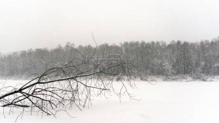 Foto en tonos opacos de un árbol solitario caído en el hielo del río en invierno en una lagartija contra el bosque cubierto de nieve .