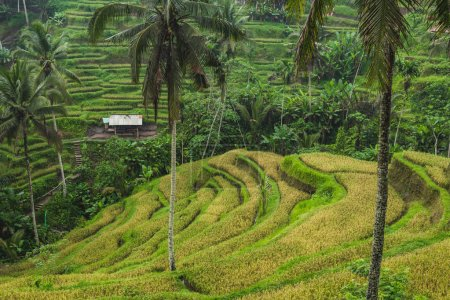 Scenic view of Tegalalang Ceking rice terraces in Ubud, Bali