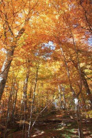 Photo pour Les montagnes des Carpates à la saison d'automne, Roumanie, Transylvanie - image libre de droit