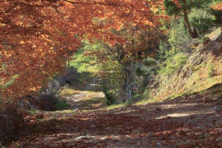 Photo pour Parc National de Piatra Craiului à la saison d'automne, Roumanie - image libre de droit
