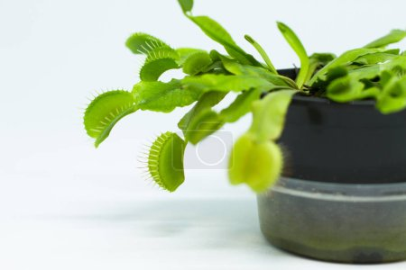 Photo for Green plant in the pot on background, close up - Royalty Free Image
