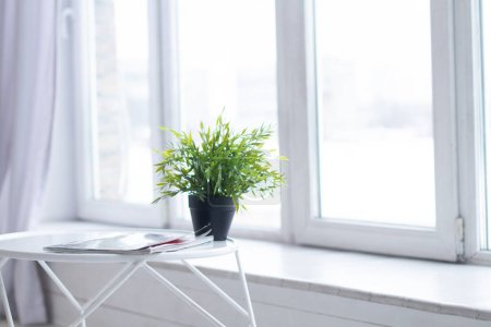 Photo for Green plants on the window sill - Royalty Free Image