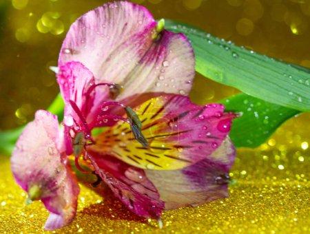 Foto de Macrocierre de la flor con gotas de agua - Imagen libre de derechos