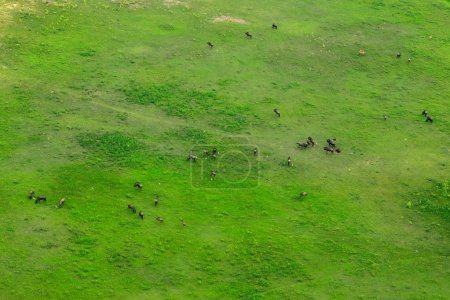 Wildebeest in aerial landscape in Okavango delta, Botswana. Lakes and rivers, view from airplane. Green vegetation in South Africa. Trees with water in rainy season.