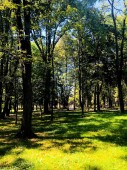 Wonderful landscapes of nature. Image of city park. Tall trees and sunshine.