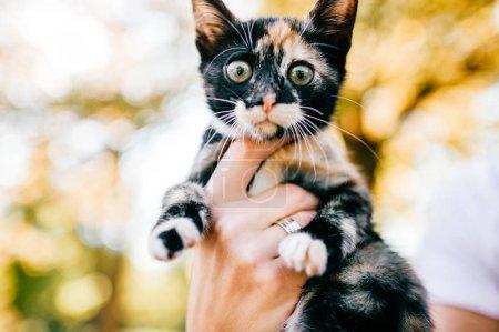 Photo pour Plan recadré de femme tenant peu trois chaton de couleur sur fond flou - image libre de droit