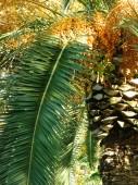 """Постер, картина, фотообои """"Тропический фон с пальмы"""""""