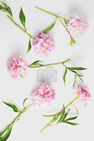 Photo pour Pink peony flowers on white stone table with copy space for your text top view and flat lay style. - image libre de droit