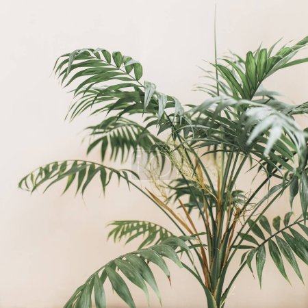 Exotic tropical palm branches on pale pastel beige background. Minimal floral concept.
