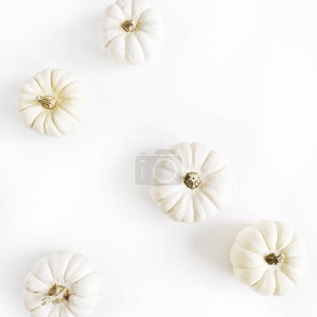 Photo for White pumpkins. Fall autumn minimal concept. Flat lay, top view. - Royalty Free Image