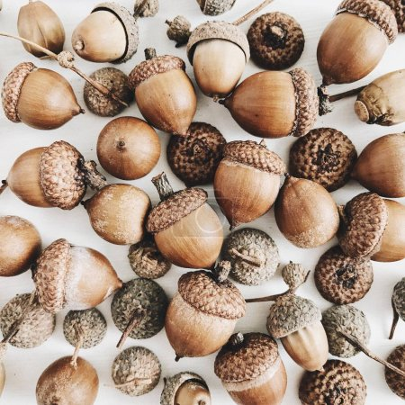 Photo for Acorns collage. Flat lay autumn fall minimal concept. - Royalty Free Image