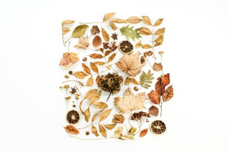 Flat lay, top view. Creative fall composition with dry autumn leaves.