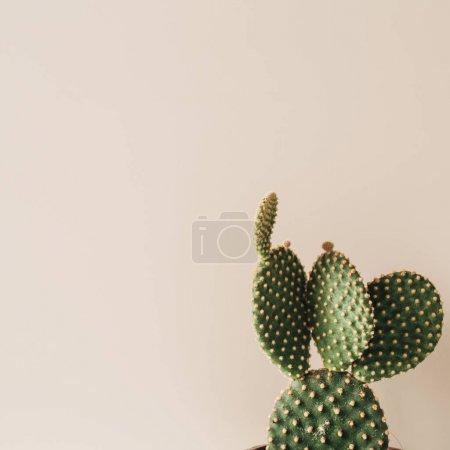Photo pour Gros plan de cactus sur fond beige. Composition florale minimale . - image libre de droit